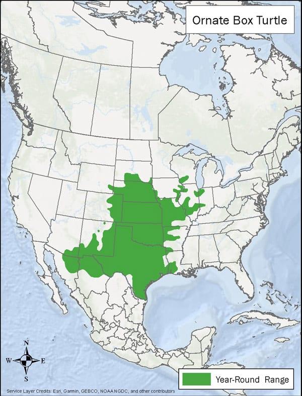Ornate Box Turtle range map