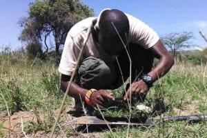 Man examining soil in field
