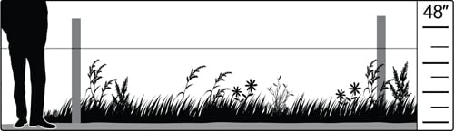 Habitat illlustration: midgrass prairie