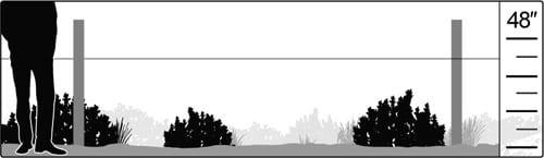Habitat illlustration: sagebrush shrubland