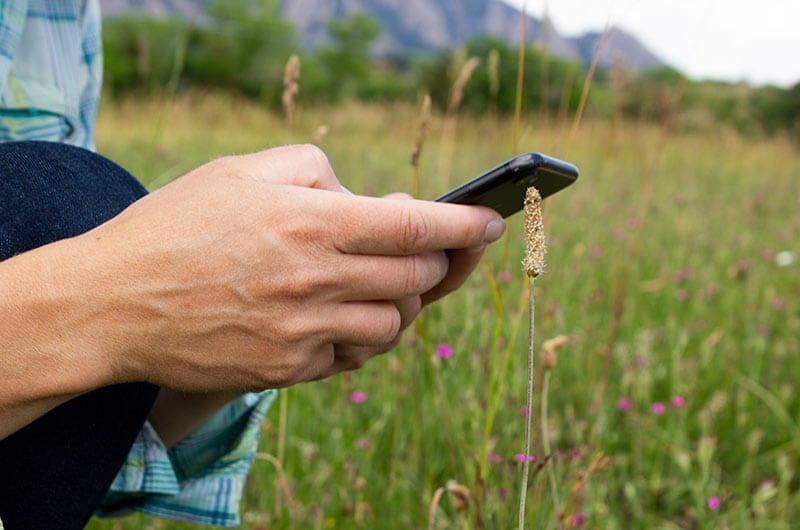 Hands operating a smartphone in a field