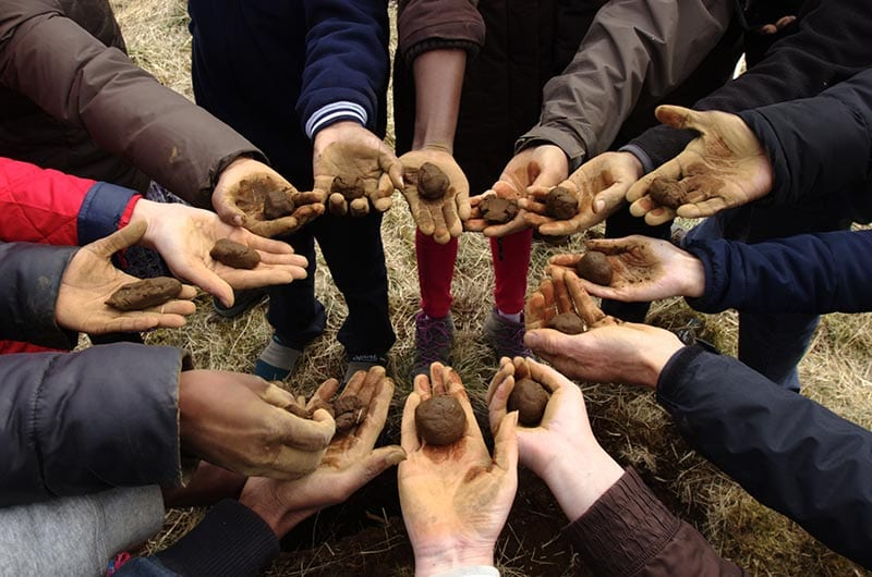 Hands with soil balls