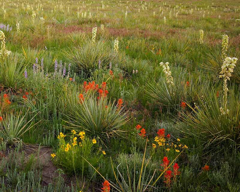 Wildflowers, USA