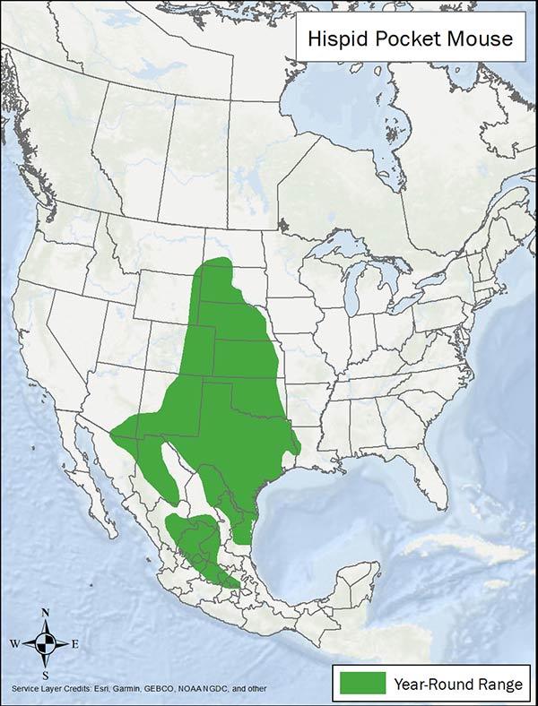 Hispid pocket mouse range map. Range is from the Dakotas south through Texas, Arizona, and Mexico.
