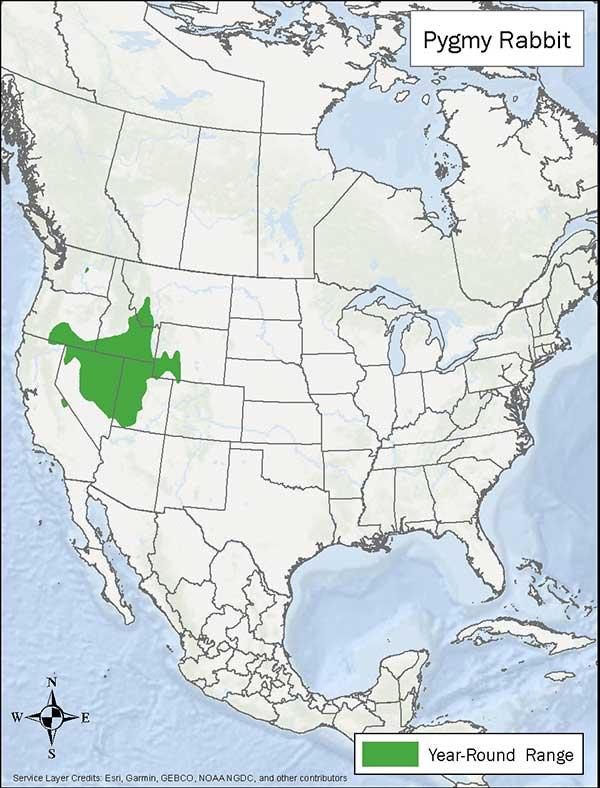 Pygmy Rabbit range map. Year round range is parts of Oregon, Idaho, Montana, Wyoming, Utah, Nevada.