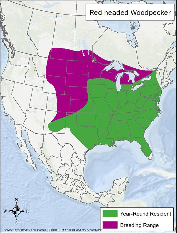 Red-headed woodpecker range map. Breeding range is southern Canada and northern and central US. Year round range is most of the eastern US.