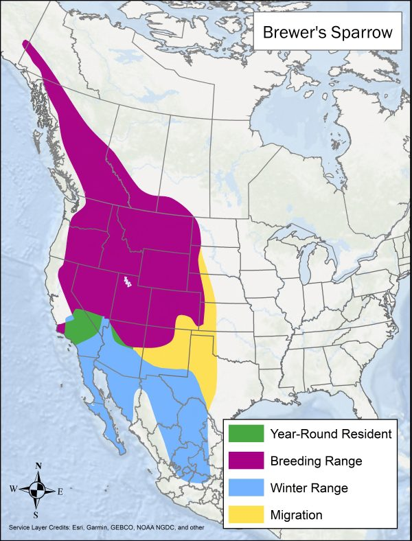 Brewer's Sparrow range map. Breeding range includes Canada and the western US, winter range is southwest US and much of northern and central Mexico, migration range includes some southwest and central states, and year round range is part of central California and southern Nevada.